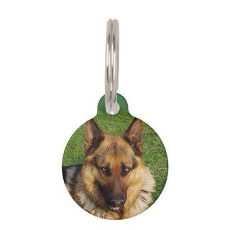 """""""Mascota que marcaría con etiqueta """" Placa Para Mascotas"""