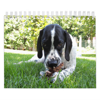 Mascotas Calendario De Pared