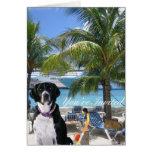 Mascotas el vacaciones tarjeta pequeña