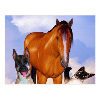 Mascotas especiales # 1 postal