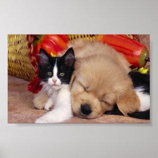 Mascotas mimosos lindos póster