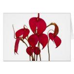 Masdevallia Orchid - Card