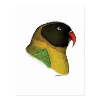 masked lovebird, tony fernandes postcard