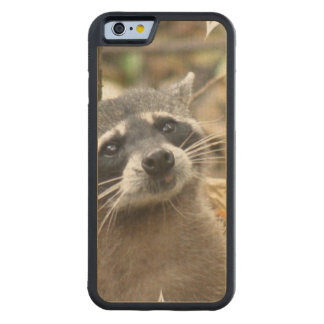 Masked Raccoon Carved® Maple iPhone 6 Bumper