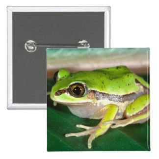 Masked Treefrog, Smilisca baudini , Native to 2 Inch Square Button