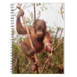 Mason Orangutan - Lend Me a Hand Spiral Note Book