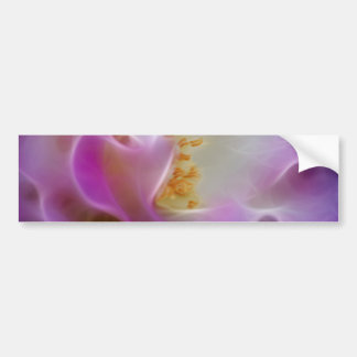 Masquerade pink rose and meaning bumper sticker