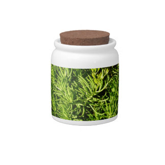 mass succulent green foliage image candy dish