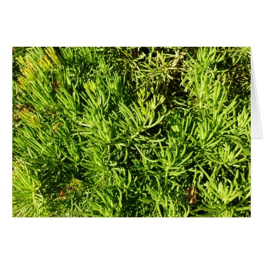mass succulent green foliage image cards
