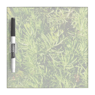 mass succulent green foliage image Dry-Erase board