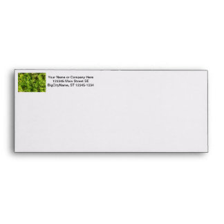 mass succulent green foliage image envelope