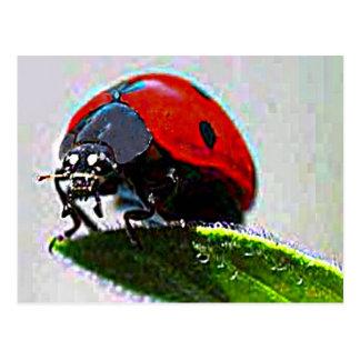 Massachusetts Ladybug Postcard