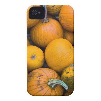 Massachusetts, Salisbury, calabazas, otoño Funda Para iPhone 4