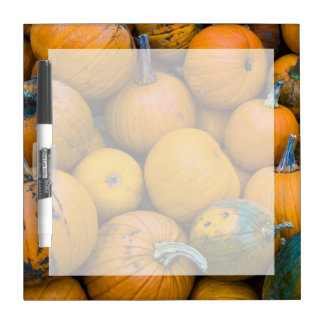 Massachusetts, Salisbury, calabazas, otoño Pizarras