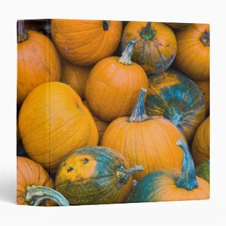 Massachusetts, Salisbury, pumpkins, autumn Binder