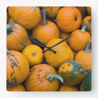 Massachusetts, Salisbury, pumpkins, autumn Square Wall Clocks