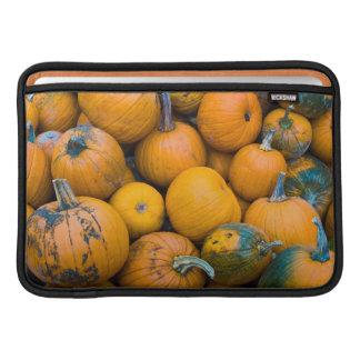 Massachusetts, Salisbury, pumpkins, autumn MacBook Sleeve