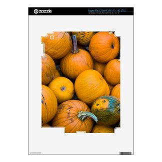 Massachusetts, Salisbury, pumpkins, autumn Skins For iPad 3