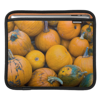 Massachusetts, Salisbury, pumpkins, autumn Sleeve For iPads