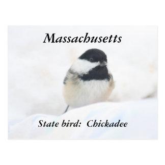 Massachusetts state bird photography postcard
