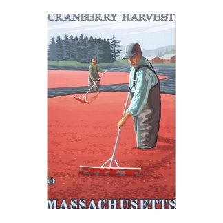 MassachusettsCranberry Bog Harvest Canvas Print