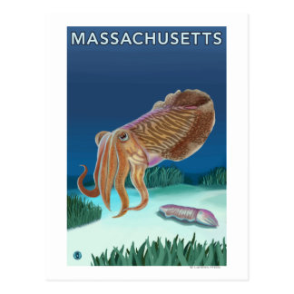 MassachusettsCuttlefish Scene Postcard