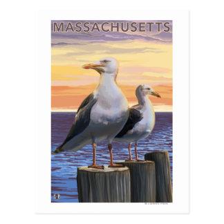 MassachusettsSea Gulls Scene Postcard
