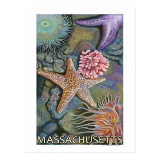 MassachusettsTidepool Scene Postcard