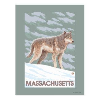 MassachusettsWolf Scene Postcard