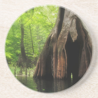 Massive Hollow Cypress Coaster