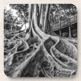 Massive rubber tree roots coaster