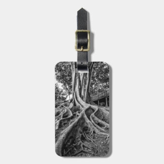 Massive rubber tree roots tags for bags