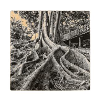 Massive rubber tree roots wood coaster