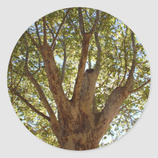 Massive Tree with Blue Sky Classic Round Sticker
