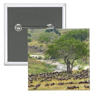 Massive Wildebeest herd during migration, Pinback Button