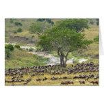 Massive Wildebeest herd during migration, Greeting Card