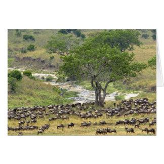 Massive Wildebeest herd during migration, Card