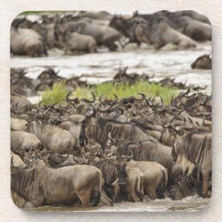 Massive Wildebeest herd during migration, Coaster