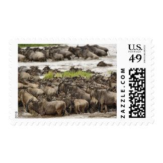 Massive Wildebeest herd during migration, Postage Stamps