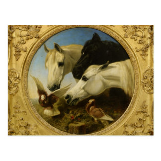 Masterpiece horse & dove painting John Herring Postcard