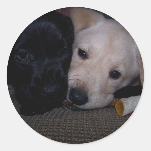 masticación del mismo pegatina del chew del perro