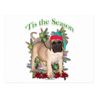 Mastiff 2 'Tis Postcard