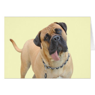 Mastiff Birthday Card by Focus for a Cause