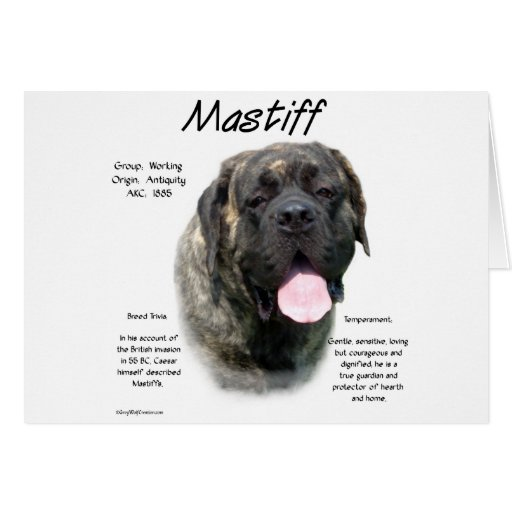 Mastiff (brindle) History Design Card