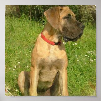 Mastiff Dog Print