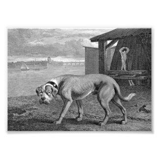 Mastiff Dog Vintage Illustration Photo Print