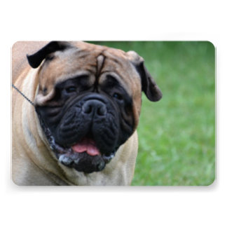 Mastiff Personalized Invites