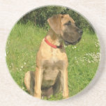 "Mastiff Puppy Dog Coasters<br><div class=""desc"">Mastiff Puppy Dog Coasters.</div>"