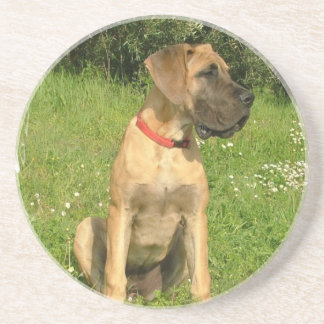 Mastiff Puppy Dog Coasters