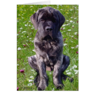 Mastiff puppy in field greeting cards